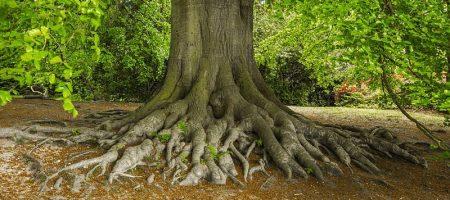 Entendiendo el Árbol Estratégico